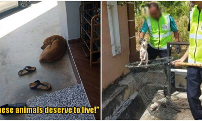 This Mother Dog And Puppies Were Captured For Causing Disturbance, Netizens Enraged - WORLD OF BUZZ
