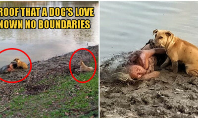 Two Stray Dogs Fiercely Protect Homeless Elderly Blind Woman As She Sleeps By Riverbank - WORLD OF BUZZ 2