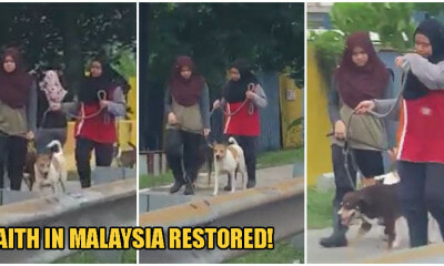 Video: 2 Kind Malay Girls Bring Cute Doggos Out For Walks, Restores Faith Of Harmony In M'sians - WORLD OF BUZZ