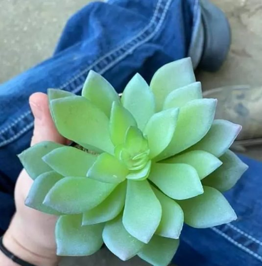 Woman Waters 'Perfect Plant' Every Day For Years, Only To Discover That It's Made Out Of Plastic - WORLD OF BUZZ