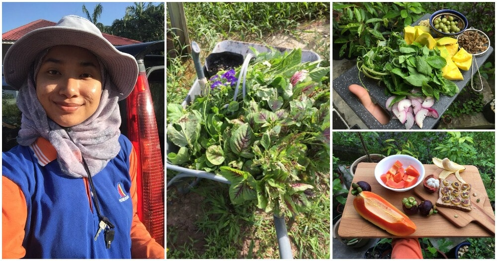 27yo M'sian Masters Grad Gives Up Life In City, Moves Back To Kampung To Become Farmer - WORLD OF BUZZ 9