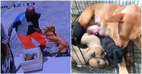Cancer-Stricken Mama Dog Begs Owner To Not Abandon Her & Her 5 Little Puppies - WORLD OF BUZZ 5
