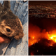 Forest Fires Are Ablaze In Chiang Mai As Animals Suffer & Die - WORLD OF BUZZ