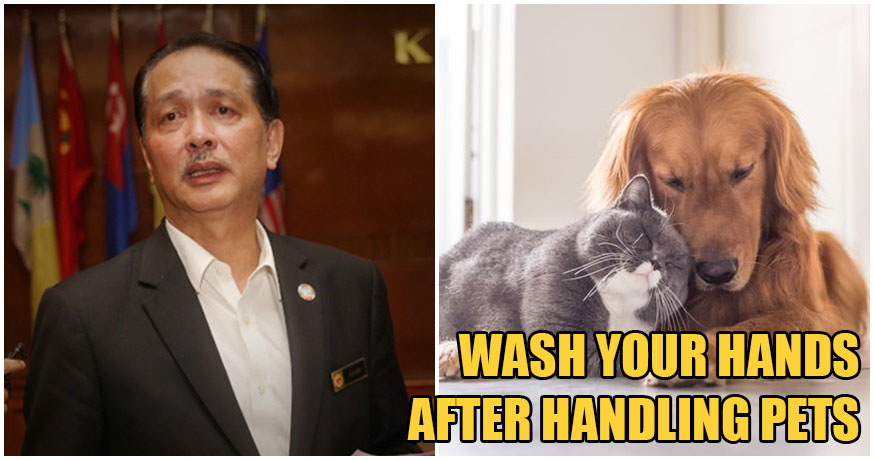 Health D-G: Avoid Close Contact With Animals, Continue Maintaining Good Hygiene Habits - WORLD OF BUZZ