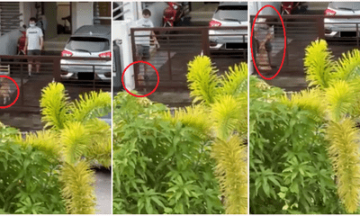 M'sian Man Caught on Camera Kicking & Abusing Dog, Netizens Call For Justice To Be Served - WORLD OF BUZZ