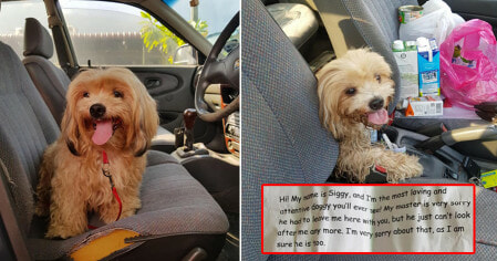 M'sian Man Finds Lost Doggo On Road With a Note Saying Its Owner Can't Take Care of It Anymore - WORLD OF BUZZ 1