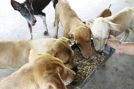 SPCA Seberang Prai Might Close Down As They Are Struggling To Feed 2,500 Animals - WORLD OF BUZZ 2