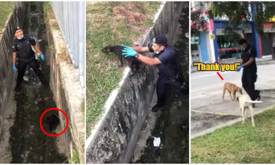 Watch: Abang Polis Rescues Small Doggo Stuck In Drain, Canine Family Grateful - WORLD OF BUZZ 1