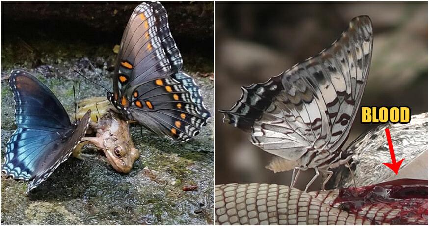 Butterflyft02Caption