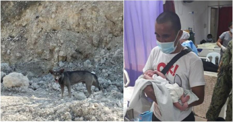 Dog Save Baby 2