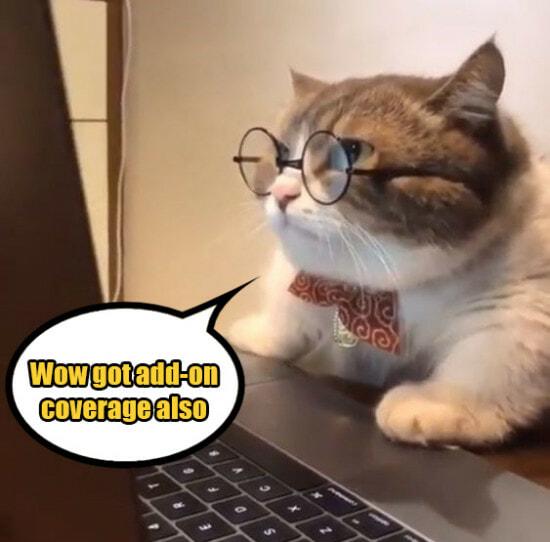 Cat Laptop 3