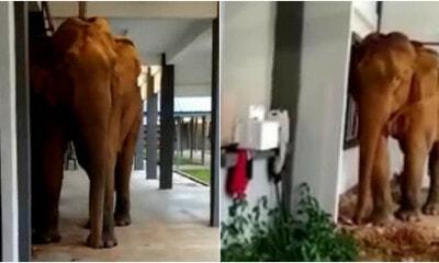 Elephant Ft