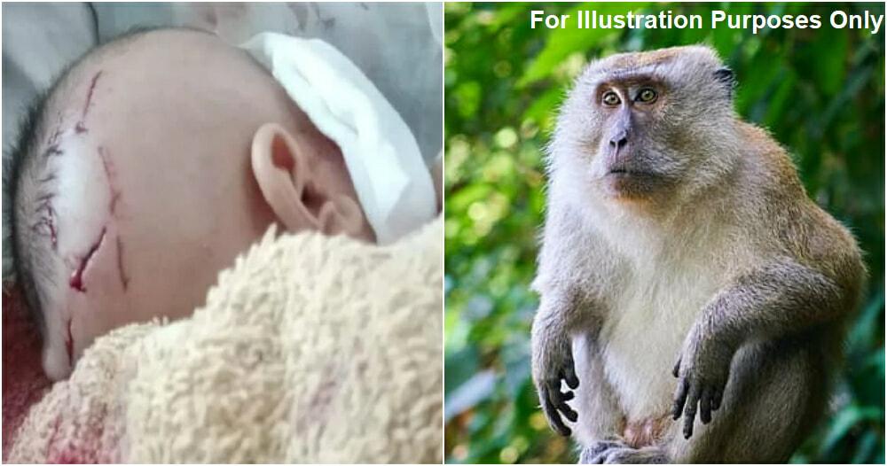 Monkey Attack Baby 2 Ft 2.0