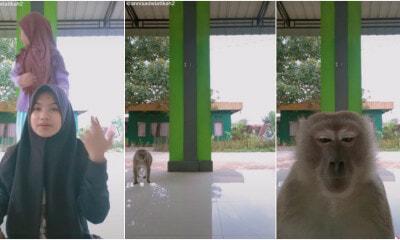 Monkey Phone Ft