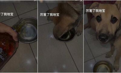 Dog Alcohol