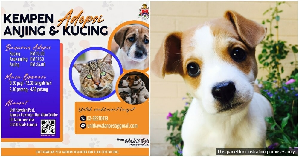 Dbkl Adopt A Dog Or Cat Campaign