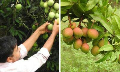 Khan Farm Mango Banana Apple
