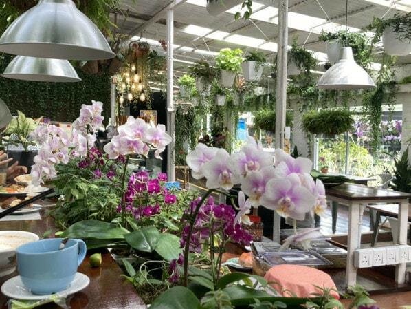 Orchid Farm Cafe Ulu Yam Selangor 3