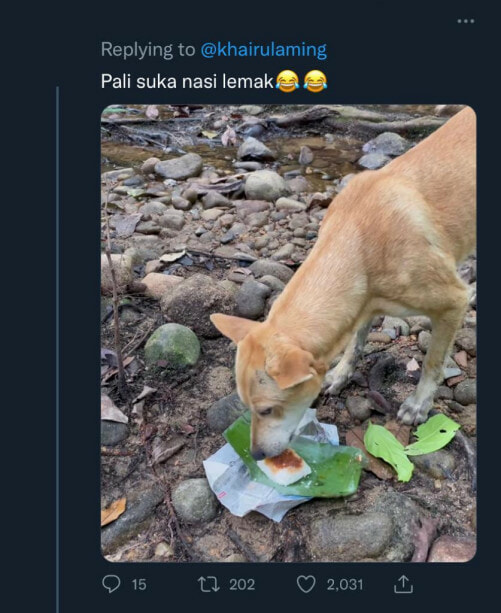 Pali Eating Nasi Lemak